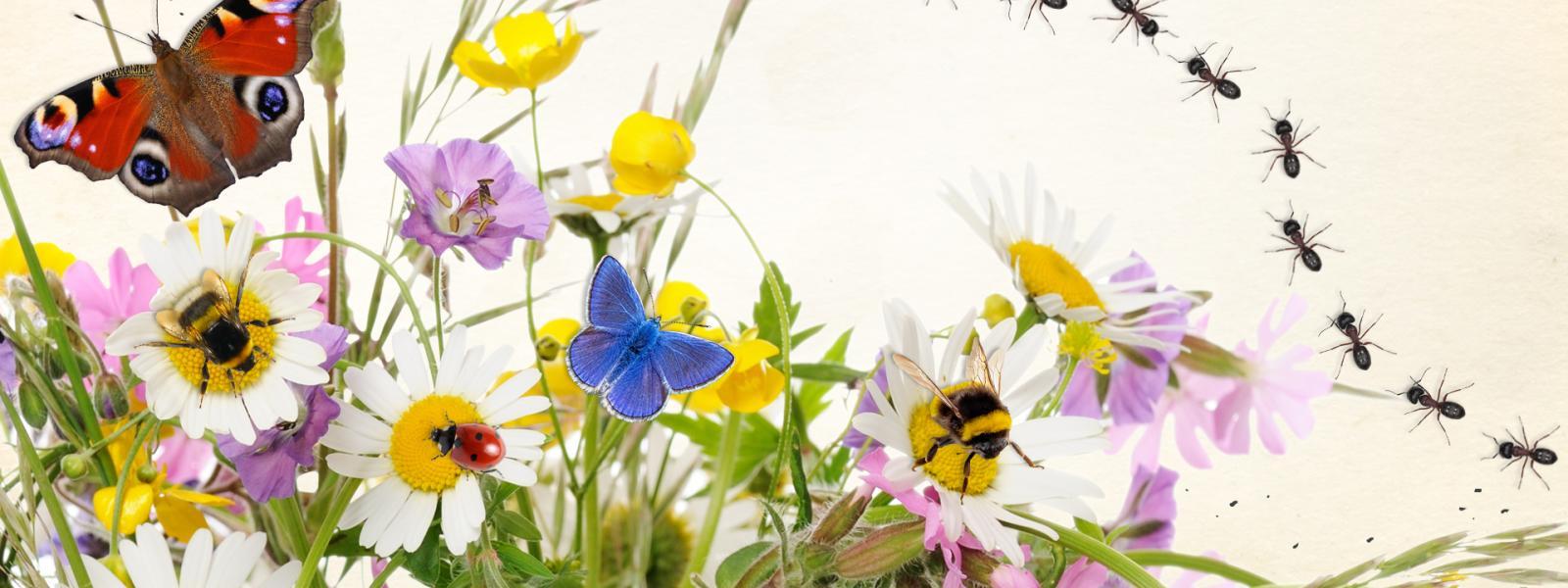 Schmetterlinge, Käfer, Ameisen, Blumen