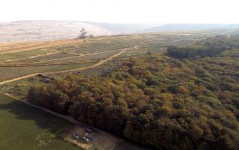 Hambacher Wald: Retten statt roden. Foto: D. Jansen